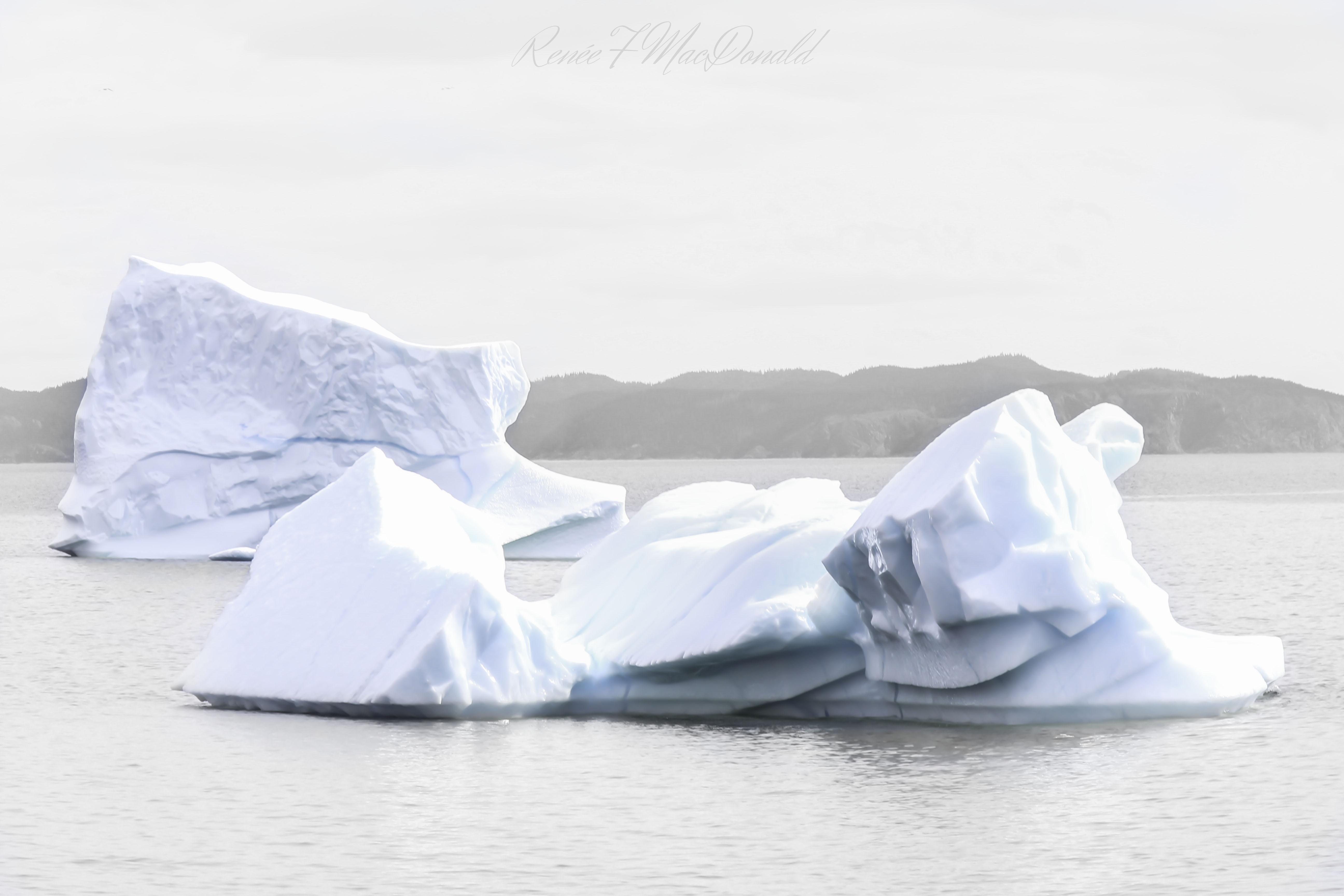 Icebergs_Twillingate